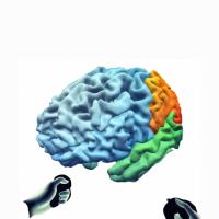 Virtual Brain Project